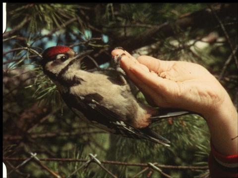 Woodpecker 3 Footage