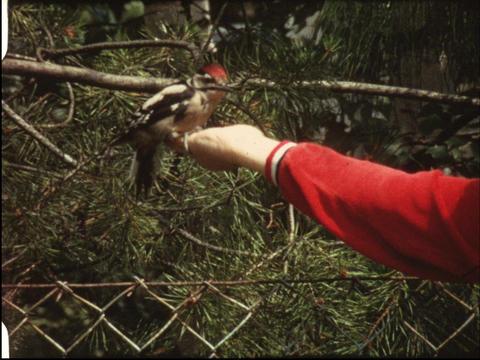 Woodpecker 5 Footage