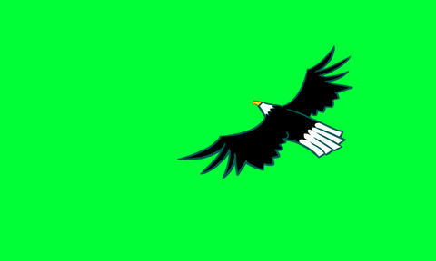 Eagle stock footage