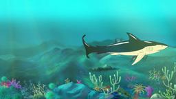 Shark Swimming Footage