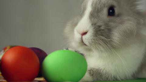 Easter Bunny with Easter eggs Footage