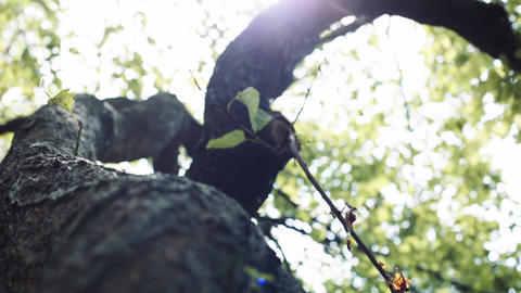 Camera moves around the tree ライブ動画