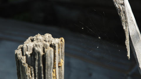 Cobweb closeup, beautiful spider's web Footage