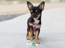 Dog has found money Photo