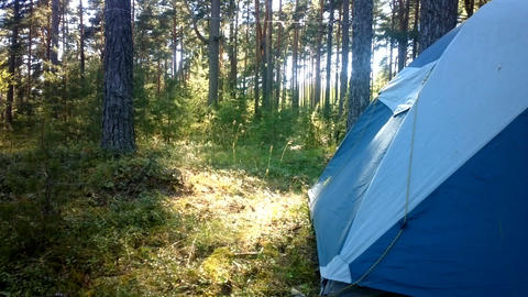camping outdoor with tent in woods in summer Footage
