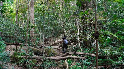 Adult man photographer walking through beautiful jungle Stock Video Footage