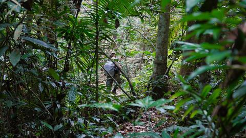 Adult man photographer walking through beautiful jungle Footage