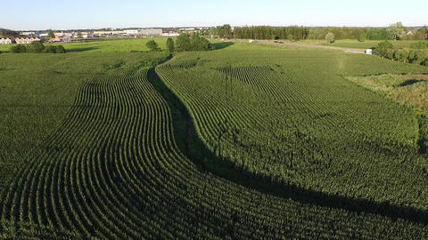 Cornfield Aerial High Angle Zoom in the Summer Footage