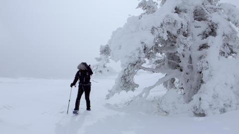 Woman advances to camera during a copious snowfall next to frozen trees Footage