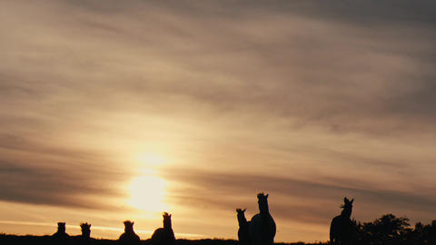 Herd of wild horses moving through the yellow hills,... Stock Video Footage