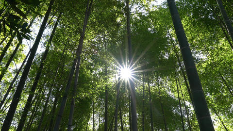 Bamboo forest with sunny lens flare Footage