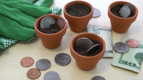 USD Growing Money in Pots Concept Footage