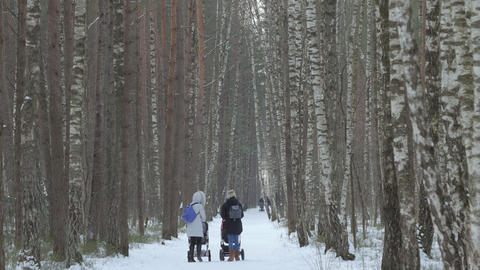 Two mothers is walking with a strollers in the winter in a birch forest Footage