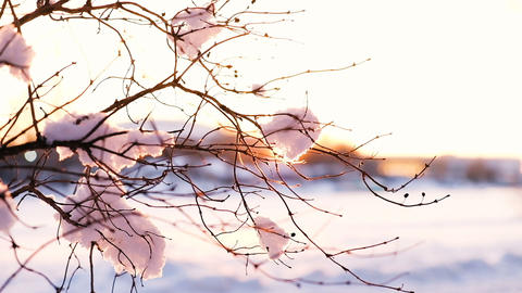 The sunset rays shine through a snowy swinging branch, slow motion Footage