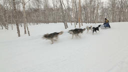 Kamchatka Sled Dog Racing Beringia, Russian Cup of Dog Sled Race (snow Footage
