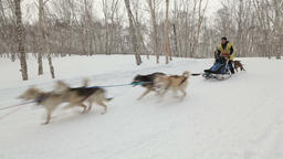 Kamchatka Dog Sled Race Beringia, Russian Cup of Sled Dog Racing (snow GIF