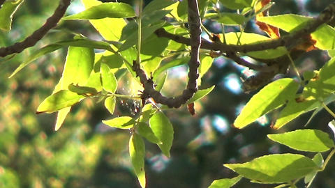 Close Up Of A Green Tree Against The Sunlight stock footage