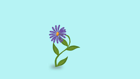 Flower Grow Animation