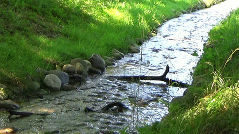 Scenery with a glittery water stream and a fallen branch flowing in the summer Footage