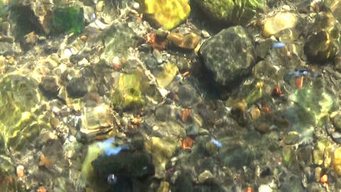 Water stream flowing, rocks at the bottom and fallen leaves downstream in summer Footage