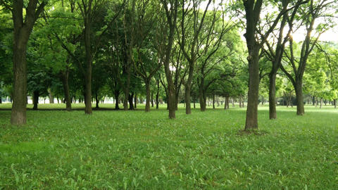 Quiet Green Beautiful Park in the Summer Footage