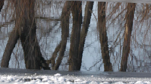 Reflection of trees without leaves in water Footage