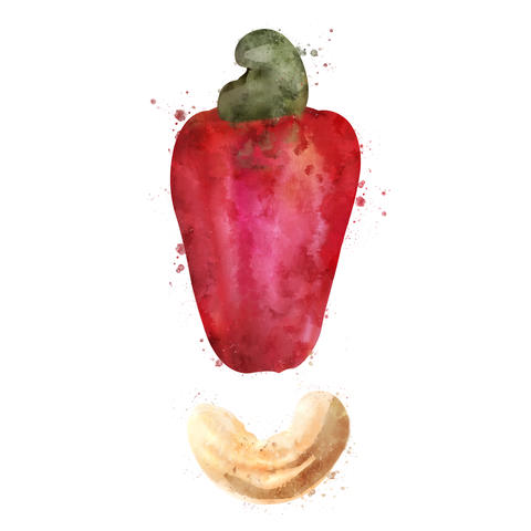 Cashew on white background. Watercolor illustration フォト
