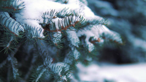 snow falls in a winter park with snow-covered trees. Slow motion Footage