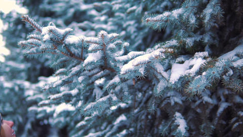 slow motion, the girl touches a snowy branch in a winter park, the snow falls Footage