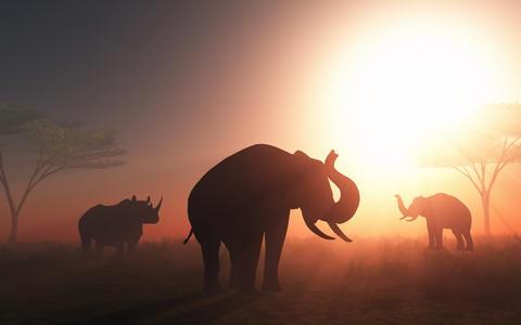 3D wild animals at sunset Photo