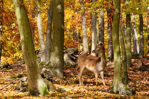 Adorable-deer-among-the-trees Photo