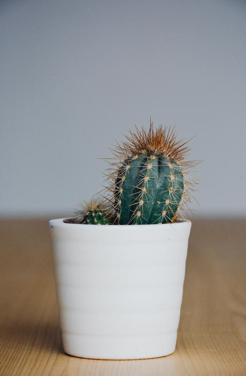 Little Cactus with White Flower Pot Photo