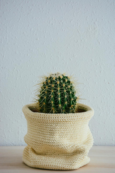 Cactus with Rope Flower Pot Photo