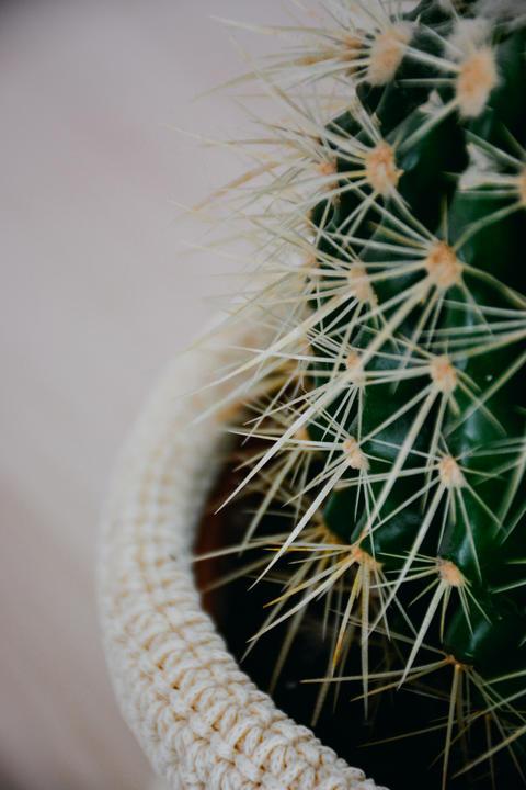 Close Up Cactus Detail 2 Photo