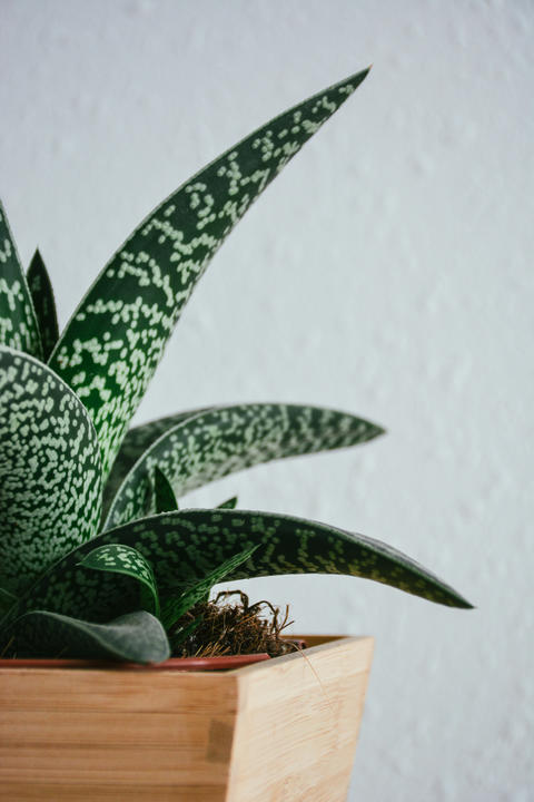 Green Plant Detail with Wooden Flower Pot Photo