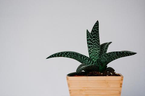 Green Plant Wooden Pot Photo