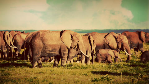 Elephants herd on savanna. Safari in Amboseli, Kenya, Africa フォト