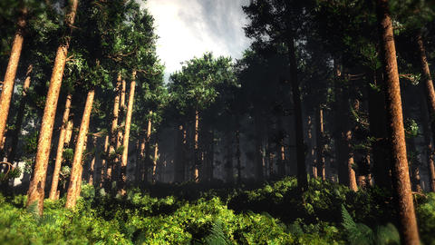 4K Epic Evergreen Forest Cinematic 3D Animation 2 Animation