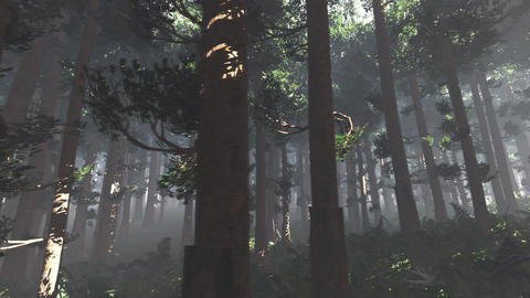 4K Epic Evergreen Forest Cinematic 3D Animation Flat 3 Animation
