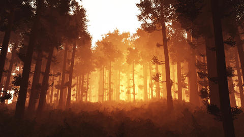 4K Wonderful Epic Evergreen Forest in the Sunset Cinematic 3D Animation 1 Animation