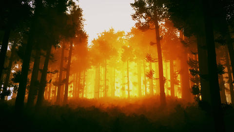 4K Wonderful Epic Evergreen Forest in the Sunset Cinematic 3D Animation 2 Animation