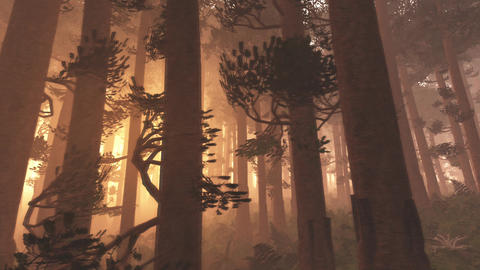 4K Wonderful Epic Evergreen Forest in the Sunset Cinematic 3D Animation Flat Animation