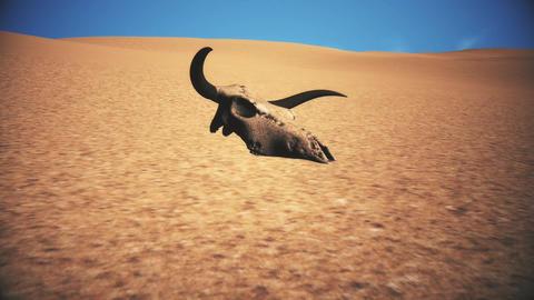 Bull Skull in Desert Global Warming Poaching Concept 3D Animation 7 Animation