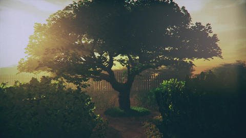 Garden of Herbs in the Sunset 3D Animation 2 Animation