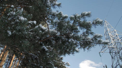 Covered with a thin layer of snow branches, electric pole and wires against the Footage