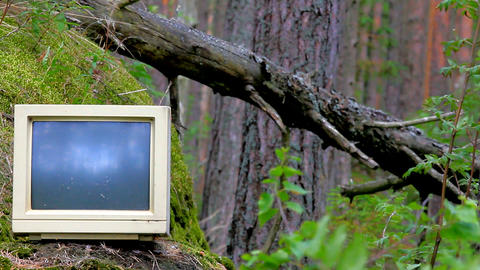 Ubiquitous Computer. Old Monitor Storm Threw Into Pine Woods stock footage