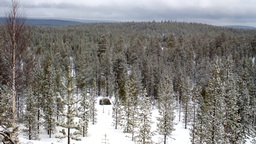 Snow-covered taiga of Lapland. After recent snowfall Footage