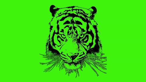 Tiger01 Footage