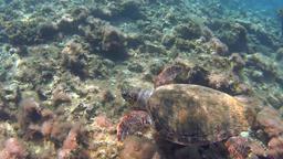 Underwater, sea turtle Footage