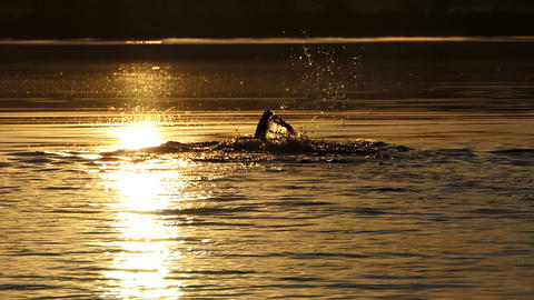 Young man swims crawl in a forest lake at sunset Image